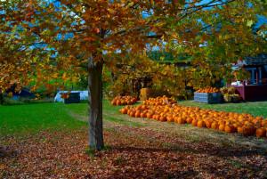 bigstock-Pumpkins-38018842